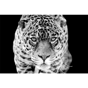 MondiArt AluArt Jaguar 120 x 180 cm -
