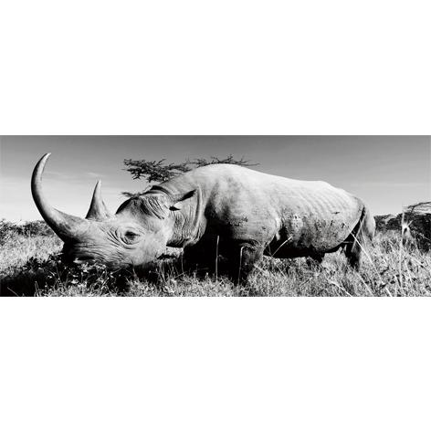 MondiArt GlasArt neushoorn 60 x 160 cm