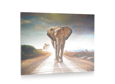 Henders & Hazel elephant walking 120 x 90 cm