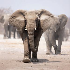 Mondiart olifanten aluart 100 x 100 cm