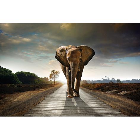 mondiart olifant glas 80 x 120 cm