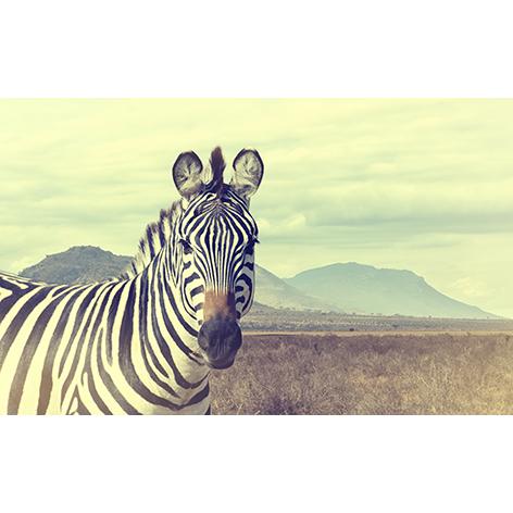 mondiart wild african zebra vintage