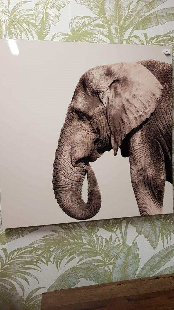 mondiart olifant 80 x 80 cm dibond showroommodel